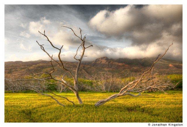 Landscape, Molokai, Hawaii.