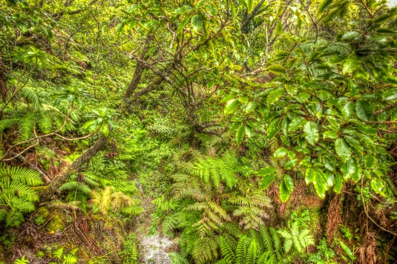 Biodiversity, Kamakou Nature Preserve, Molokai, Hawaii